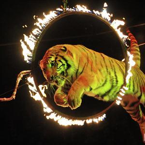 Цирки Среднеуральска