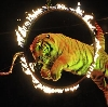 Цирки в Среднеуральске