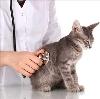 Ветеринарные клиники в Среднеуральске
